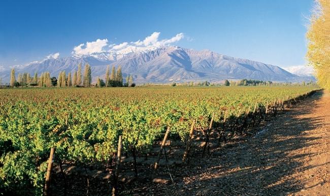 Cuidemos la Tierra ¡Es el único planeta con vino!